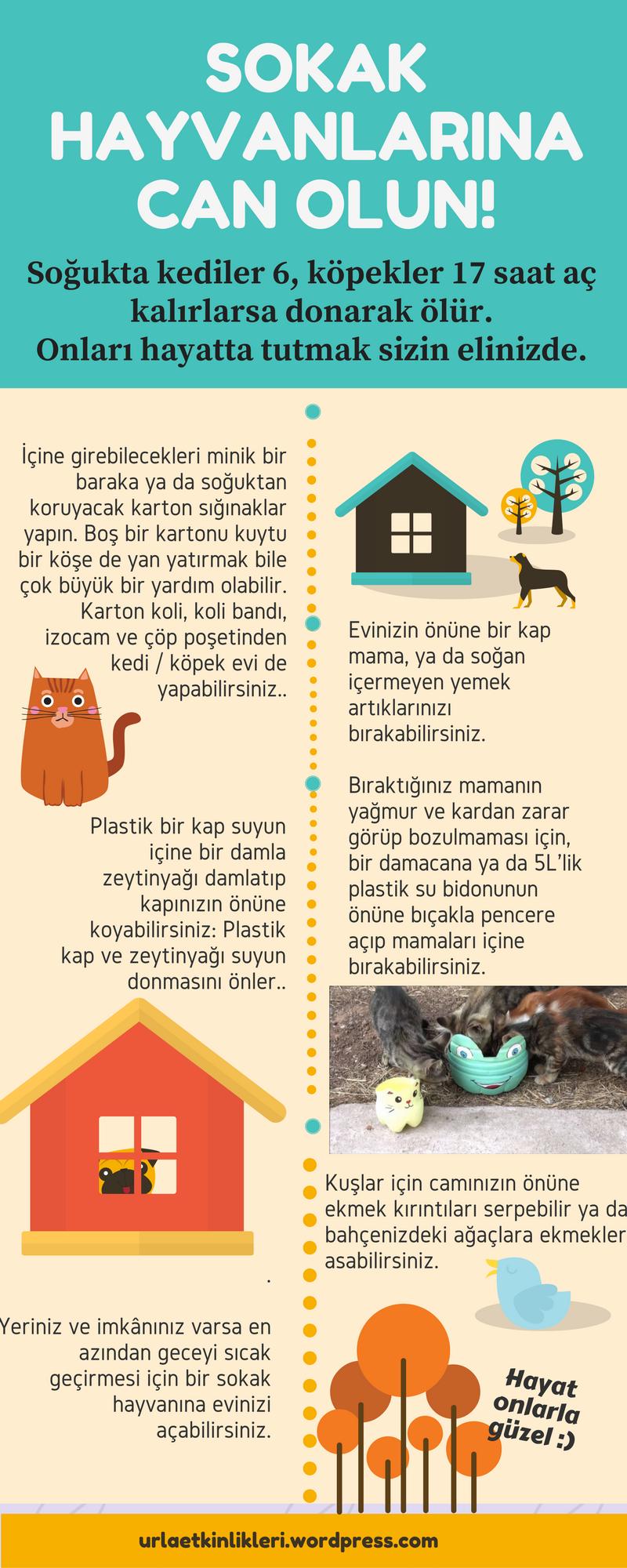 soguk-havada-sokak-hayvanlari-icin-neler-yapilmali-infografik
